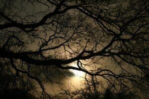 spiritual-awakening-soul-purpose-life-tracinicolesmith.com